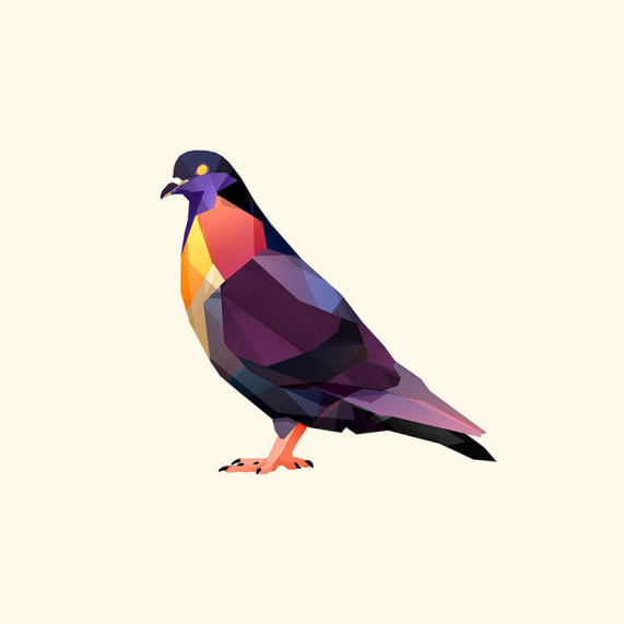 products_polygon-pigeon-26716-1920x1080